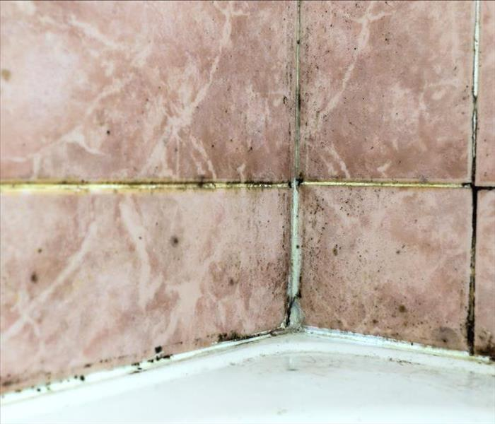 Mold Remediation Mold Damage Affecting Sharon Homeowners