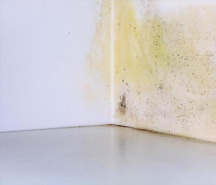 Mold Remediation Targeting Mold Damage in Statesville
