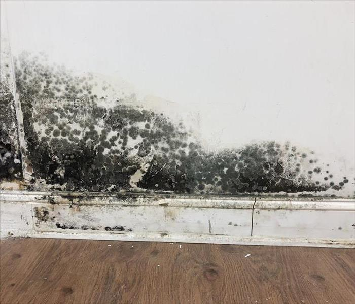 Black mold colonies growing along the base of a wall